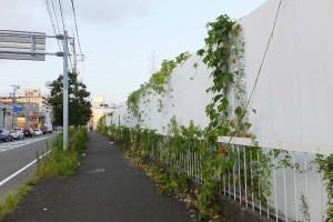 今年(2015年)8月の時点では高い壁を越えてきた草木が綱島街道の歩道にまであふれていた