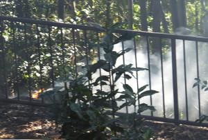 2016年2月11日に「鯛ヶ崎公園」で不審火が発生し、枯葉を燃やし続ける火