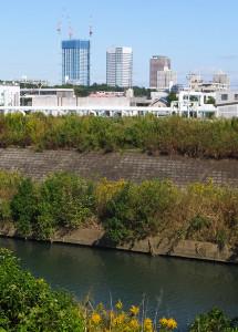 矢上川越しに日吉からは新川崎の高層ビルが見える(2015年10月)