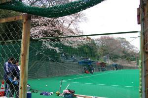 ホッケー場の桜も緑鮮やかな人工芝に映えて。会場を淡いピンクで彩ります