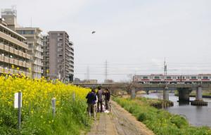綱島駅から徒歩5分程度、鶴見川の河川敷で「菜の花まつり」は開催されました