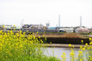 """東急東横線の鉄橋を走る列車も""""菜の花""""の向こうに眺められる絶好のロケーション"""