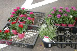 地場のお花や苗木も販売していました