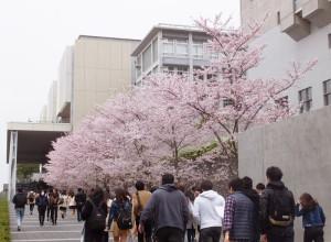 日吉駅西口からも眺められる慶應独立館の桜