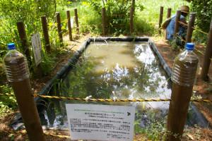 昨年2015年11月に完成したという、鳥の広場「ビオトープ」。緑道に水生動物と水辺の植物の棲みかをとの思いで作られたとのこと(リンクは東急電鉄サイト)