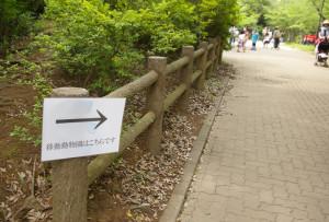 綱島公園の小高い丘へ登ったら「移動動物園はこちらです」との案内が