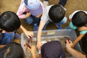 """鶴見川流域のボランティア団体「鶴見川流域ネットワーキング」による""""ミニ水族館""""にも、興味深げに多くの子どもたちが集まっていました"""