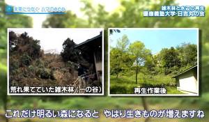 雑木林の再生などを長年行ってきた(