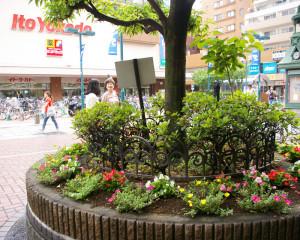 真島さんに綱島駅西口からパデュ通りを案内してもらう。パデュ通り、パデュ中央広場は、横浜市の姉妹都市フランス・リヨンをイメージしているという。「花と彫刻文化のある街・綱島」のシンボル的な存在。この花壇も「グループ花いっぱいTsunashima」のメンバーたちが手入れを行っている