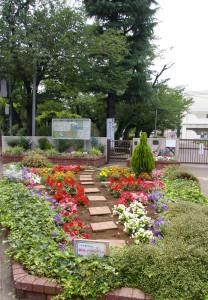 綱島小学校のPTA園芸部による花壇。真島さんが現在も同部のアドバイザーを務めていることもあり、「グループ花いっぱいTsunashima」は口コミや紹介で入会者が入ってくるという