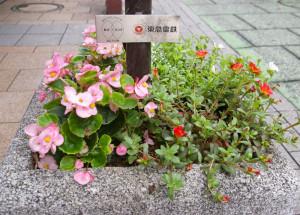 綱島駅西口ウエストアベニューに置かれたフラワーポッド(花台)。2013年に東急電鉄が主催する緑化活動支援「みど*リンク」に公募で選ばれ設置された