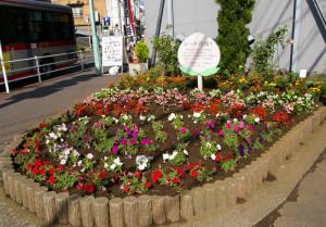 綱島西のバス通りにあるピーチ花壇。「昭和13年頃までの綱島は、日本一の桃の生産地」と街の歴史を伝える。この花壇も「グループ花いっぱいTsunashima」が手入れを行っている