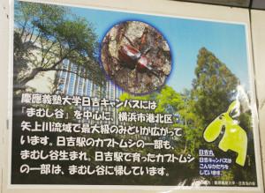 慶應日吉キャンパスの森「まむし谷」の自然環境保護の活動を行う「日吉丸の会」と日吉駅のカブトムシを通じた交流についての案内が、7月19日より日吉駅に掲示されました