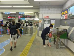 夏になると日吉駅で公開される「日吉産」のカブト虫