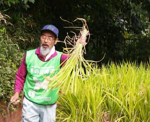 山形県出身の高島督(すすむ)さんが分かりやすく稲を刈り取る秘訣(ひけつ)を伝授。春から真夏、そしてこの秋にかけて、この小さな水田の管理をずっと行ってきた
