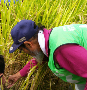 「円を描くように」と、高島さんが、児童一人ひとりに稲の刈り取り方を指導