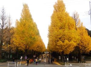 11月23日(祝・水)の銀杏並木