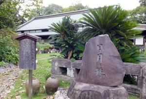 新綱島駅に隣接する農地で栽培されている綱島伝統の桃「日月桃(じつげつとう)」の石碑