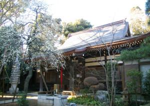 早くも7分咲きとなった下田地蔵尊「眞福寺(しんぷくじ)」のシダレウメ(2月2日)