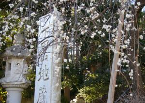 目の前の「下田地蔵尊前」バス停でのバス待ち時間にも、門前のしだれ梅の白い花見を楽しめそう