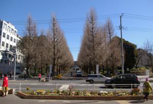"""日吉駅前に幅約20メートル、奥行2メートルの""""巨大な""""花壇が出現。新しい""""日吉の新名所""""となるか"""