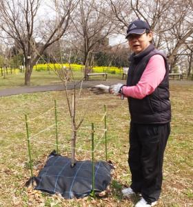 日吉の丘公園愛護会会長の小幡和夫さん。竹やぶを伐採し、今の公園美化の礎(いしずえ)を築いた。今でも日々公園美化に尽力している(池本さんが植樹した桜と)