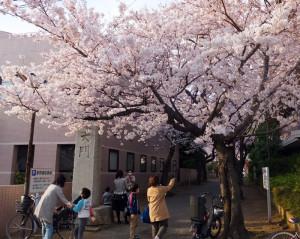 南日吉商店街内にある「桜大門」
