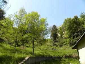 慶應義塾大学日吉キャンパスのガイドツアーも初開催される。案内は日吉キャンパス内の自然環境の整備や保全活動を行う日吉丸の会が実施する(港北オープンガーデン運営委員会提供)