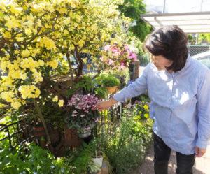 リピーターとの語らいも楽しみのひとつだという真島さん。八重咲シクラメンやシザンサス、5種類のオダマキ、キエビネ、アグロステンマなど、珍しい花も多く植えている真島さんの庭は毎年新しいチャレンジに満ちている