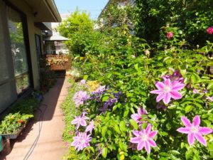 美しい中庭に入れるのもオープンガーデンならではの絶好の機会