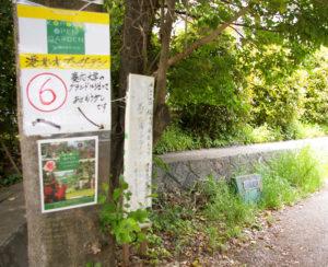 松の川緑道の慶應義塾大学下田学生寮付近。日吉丸の会によるウォーキングツアーにも人気が集まりそう(写真は2016年の同イベント開催日)