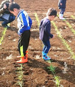広々とした畑での「麦踏み体験」は、子どもたちにも大人気!親子での参加も歓迎とのこと(同Facebookページより)