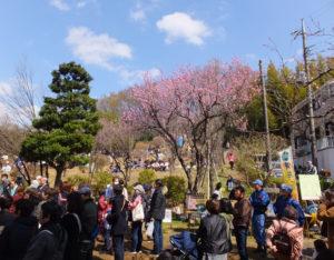 桃まつりは今年も多くの人出で賑わったが、「まだ綱島じゅうに知れ渡っているとはいえない」と御倉さん。散策のみの参加もお待ちしていますとのこと(2018年3月11日撮影)