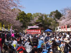 一人ひとりの想いを寄せて開催された「綱島公園桜まつり」。好天にも恵まれ、桜の花びらが舞う中、多くの人々が集い、ステージなどの催しを楽しんでいました(13時40分頃撮影)