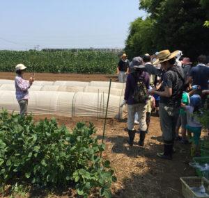 高田町での農業体験も積極的に公開して行っている(2017年7月に実施されたイベント風景、黒須悟士さん提供)