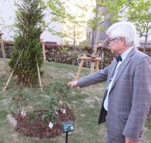 横浜開港150周年を記念して名付けられた「ハマミライ(はまみらい)」バラ。植物の名前が記されたプレートには、QRコードも掲載されており、それぞれの詳細を見ることができるという