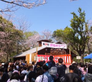 今年も綱島公園で桜まつりが開催される。「港北区制80周年」と銘打つが、実際に80周年を迎えるのは来年度(2019年度)。来年3月に30回目の開催となるのに併せて、来年度中に10本程度の桜の植樹を試みる予定(2018年3月開催の様子)