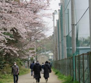 日吉で最も好きなお気に入りの場所は「松の川緑道(遊歩道)」の桜並木。「プロ野球の読売巨人軍前監督で、慶應義塾大学卒の高橋由伸(よしのぶ)さんにも、『日吉でよくお会いしましたね』と言われたこともあります」と笑顔で語る(2019年3月撮影)