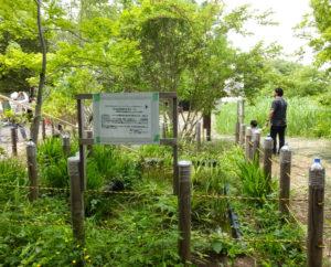 東急電鉄「みどリンクアクション」の2019年支援対象グループとなることが決定。英国(イギリス)事前キャンプ地として、約30本の樹木の英語銘板を作成する準備を進めているという(2018年5月開催時)