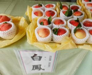 """「白鳳」の値段は、4個で1000円(税込)を予定。その日のうちに、""""もぎたてをお届け""""することにこだわっている(2018年の販売時)"""
