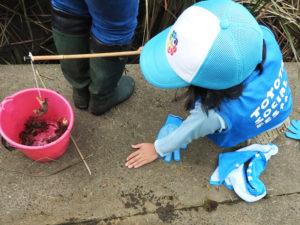 鶴見川の水温が高いことから、「カニ釣り大会」を実施することが決定。ロベンケイガニやベンケイガニに出会えるかも(2018年開催時、主催者提供)