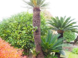 先代オーナーも愛した「ゆずの木」(左)が、地域のあたたかな交流を見守る