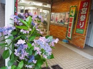 背丈が1mを超える大型の紫陽花も。種類もさまざまでお店ごとに異なる雰囲気を楽しめる(原田写真工房=日吉本町1、6月22日)