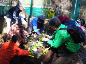 綱島公園プール(テニスコートとして今の季節は使用)の横の2つの花壇でも花の苗や球根を植える作業が行われた