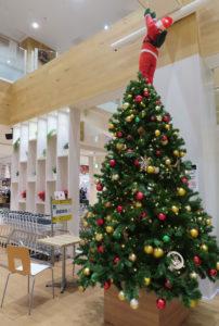 アピタテラス内にはクリスマスツリーも(1階イートインテラス)