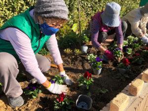 認定式後に「春の花」を植える様子。日々の地道な作業が、美しい花と緑のまちを生み出す(11月21日、同会提供)