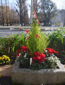 慶應義塾大学のイチョウ並木を道路向かいに佇(たたず)む日吉駅前花壇 花ポケット。クリスマス仕様に彩られていた(2020年12月、林宏美さん撮影)