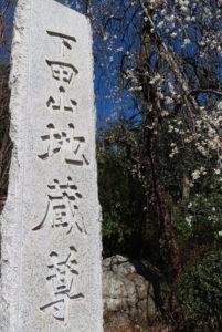 境内と門前の「シダレウメ」がすでに満開となった下田地蔵尊(眞福寺)