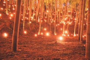約2500本の竹に灯された「竹灯籠」が幻想的な世界へと誘う(主催者提供)