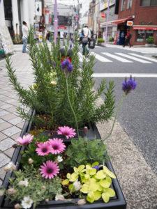 緑豊かな地域づくりを行うためにもと「日吉グリーンアクション」メンバーにより、新たに日吉中央通りにプランター17基が設置された(5月7日)